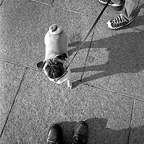 Looking_down_at_Spike_Montreal_1998500px_